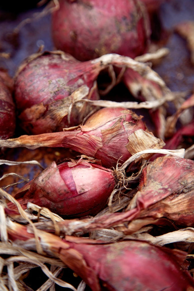 red onions.jpg