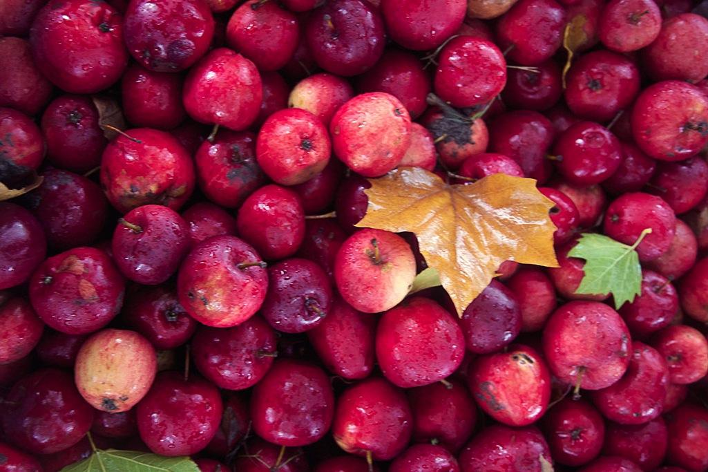 autumn-apples.jpg