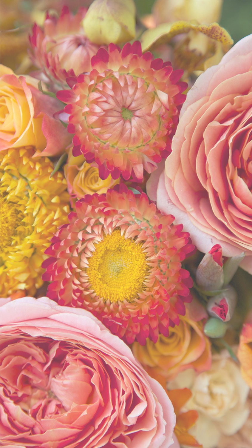 Free Floral Phone Wallpapers Summer Collection Capture By Lucy