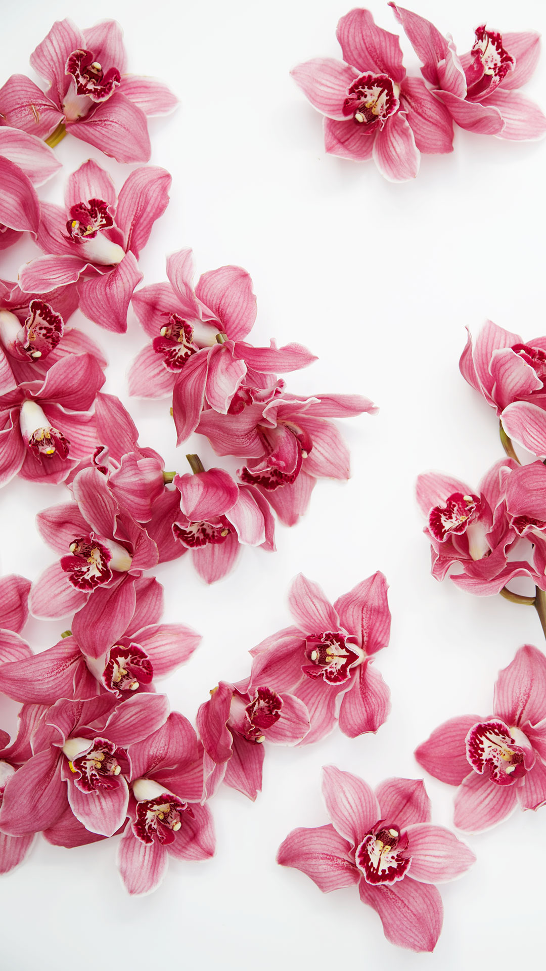 Free Floral Wallpaper And Capturingcolour Spring Blooms