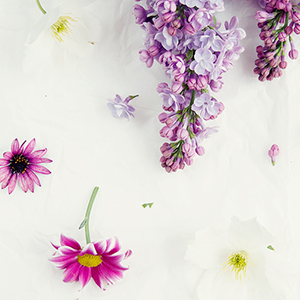 Spring 1 collection - 10 FREE downloads in 2 filters