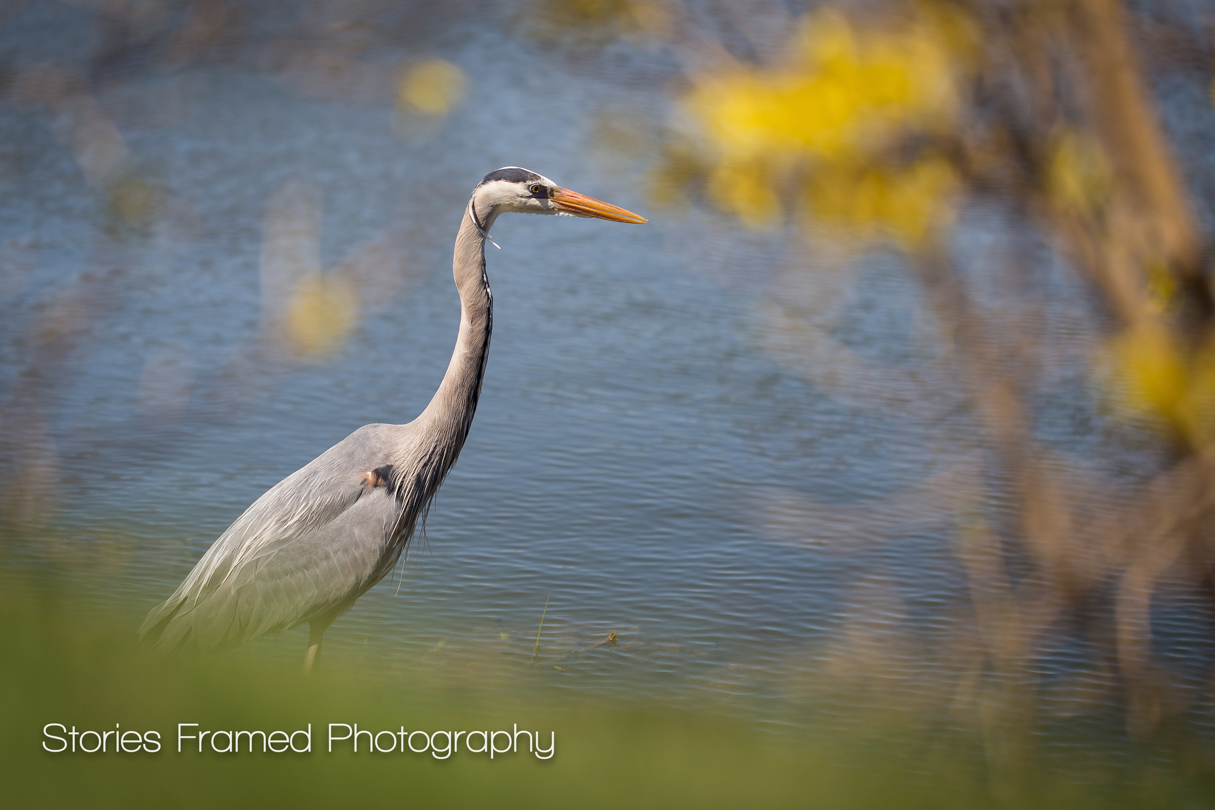 Stories Framed Photography | bird looking for food