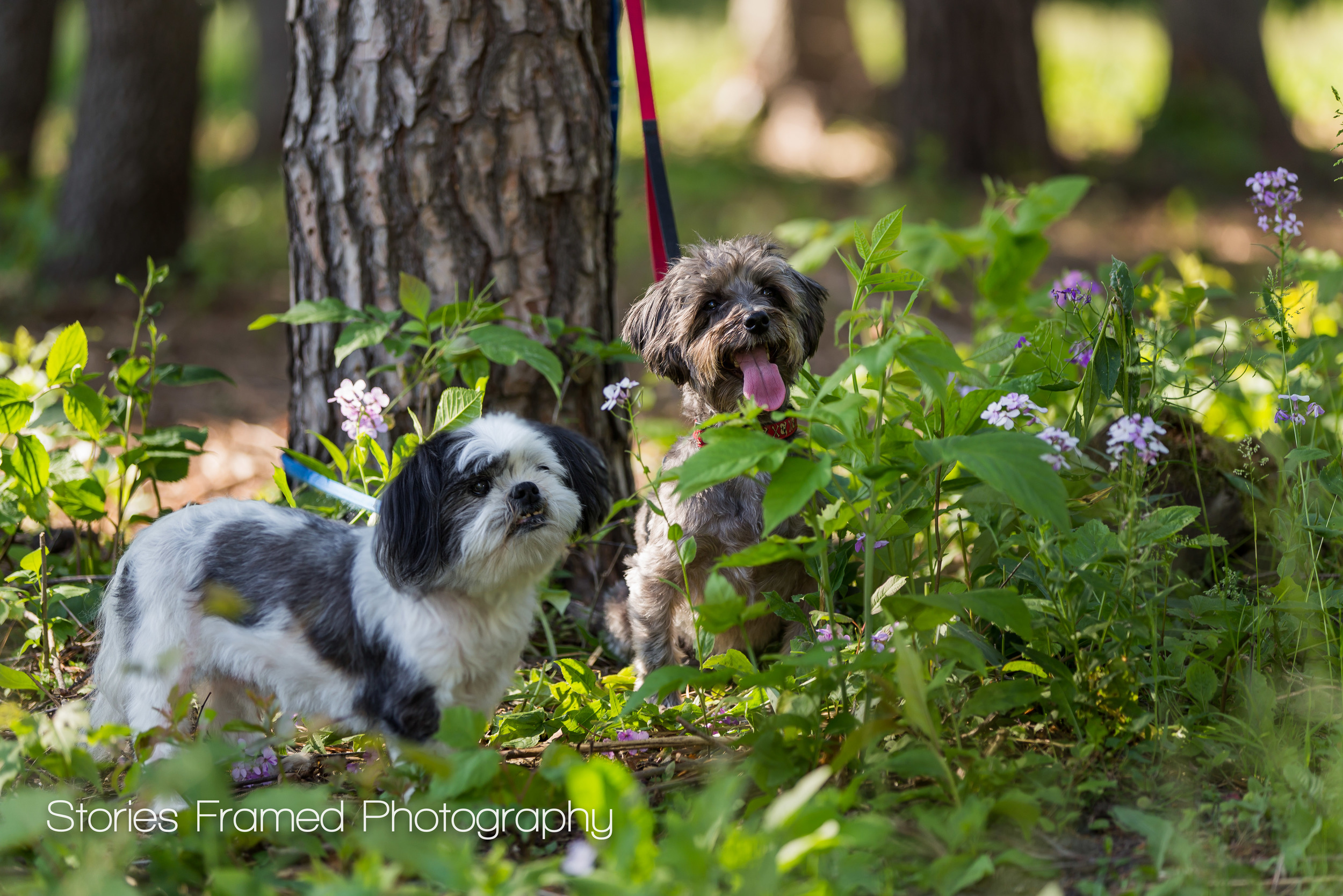 Milwaukee-Family-Portraits-pets-dogs-park