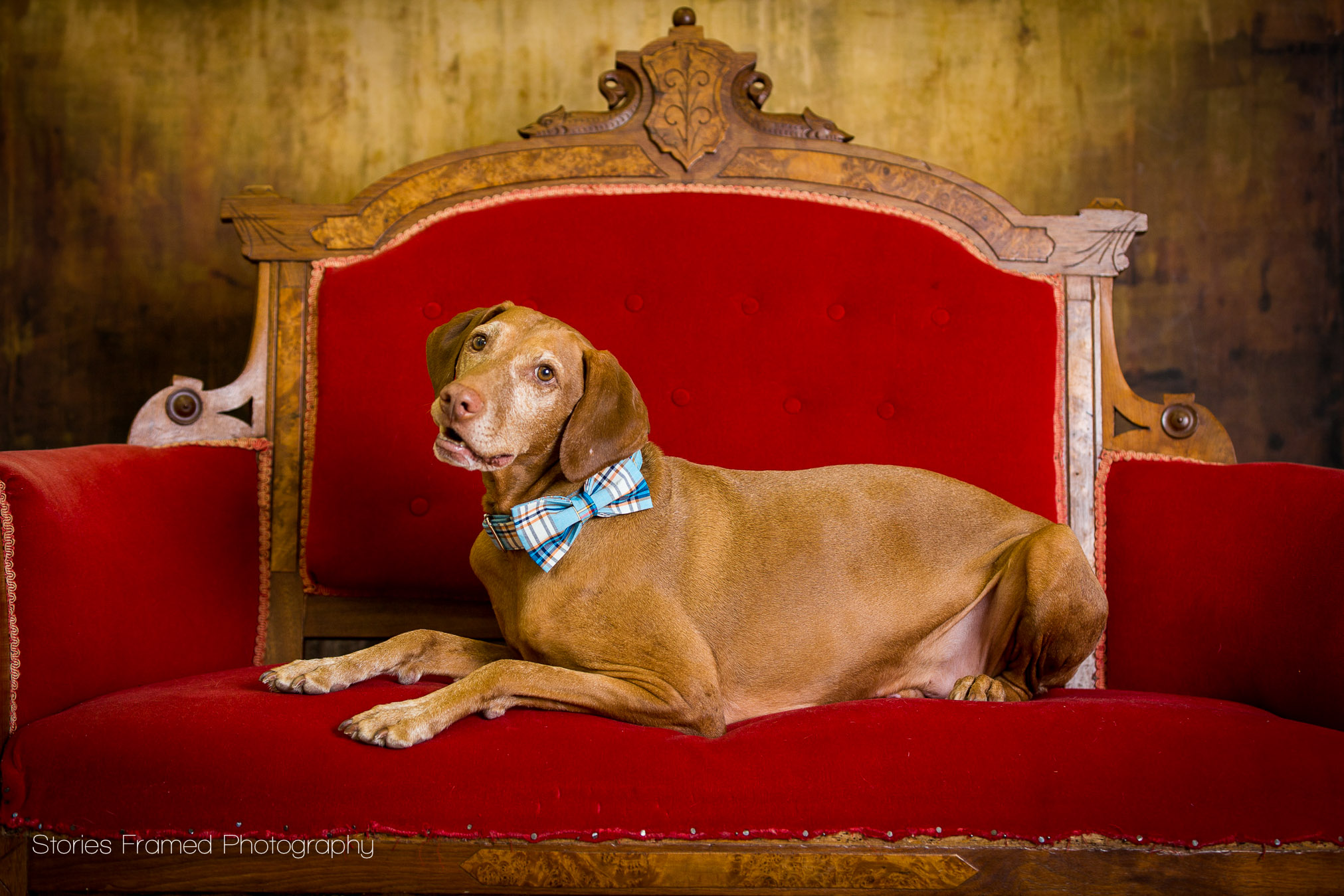 This dog is a model and hammed it up for his family photography session.