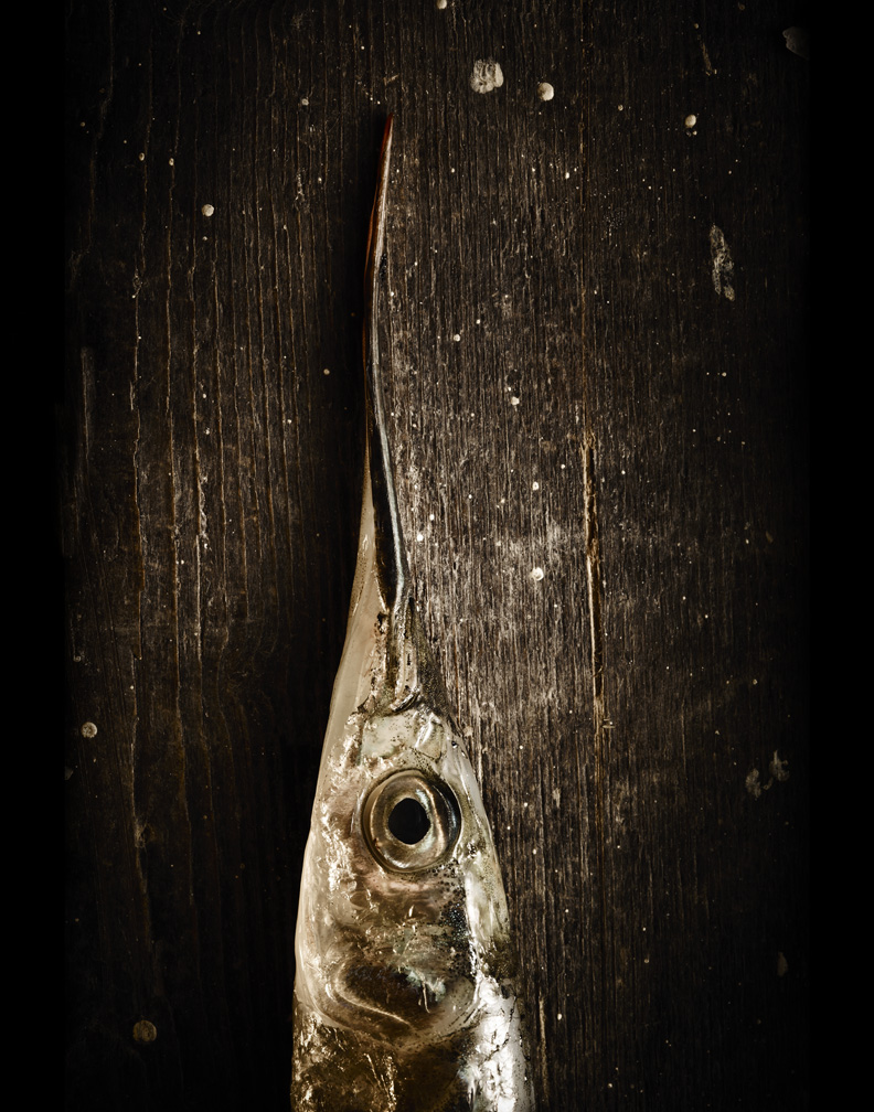 Garfish head web.jpg