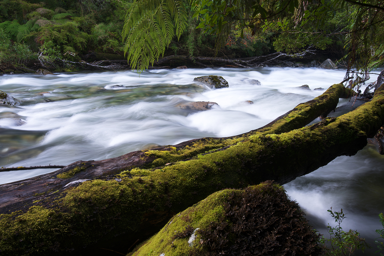 river-moss-pumalin-1500.jpg