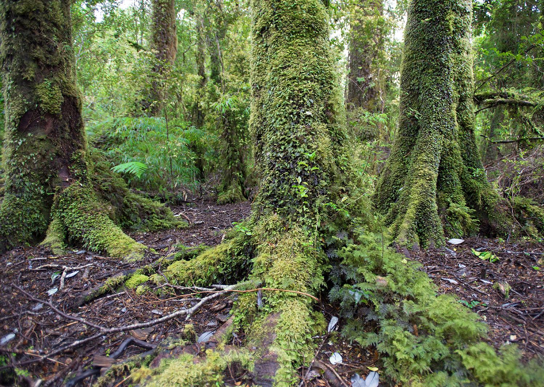 TreeFeet-Caleta-Gonzalo-Cascadas 2.jpg