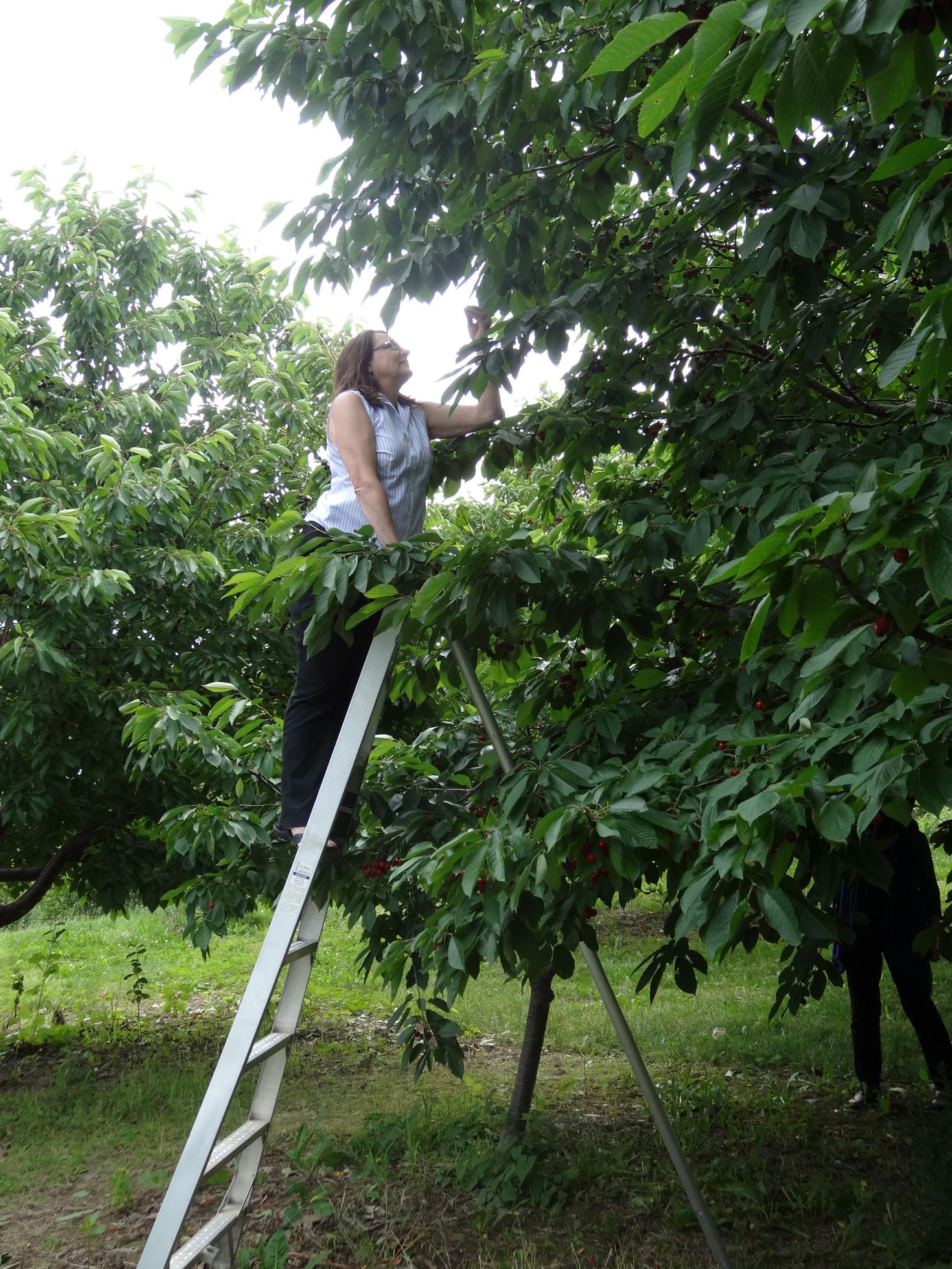 delise ladder.jpg