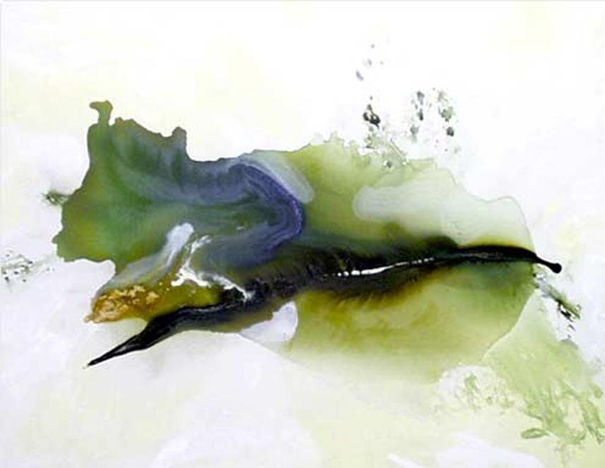 """""""Bird of Paradise"""" by Stefan Georg"""