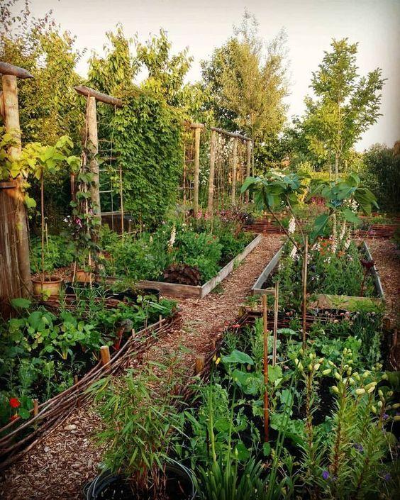 Alexandra de Curtis vegetable garden.jpg