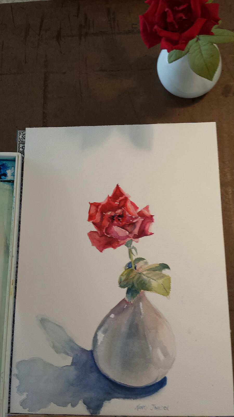 Nancy Johnson's Rose