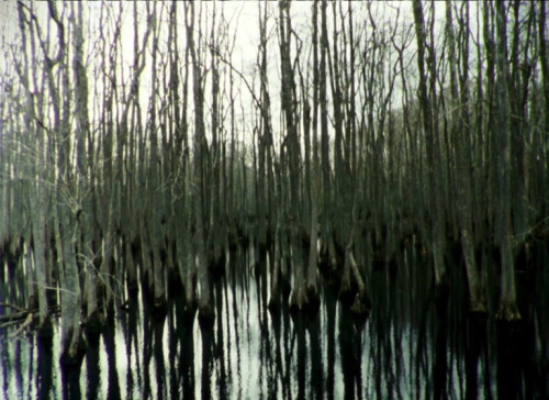 Essay Film by Deborah Stratman