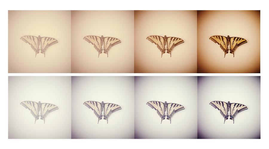 butterflydoublecomposite.jpg