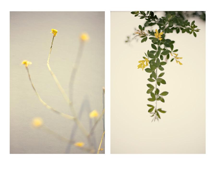 yellowdiptych.jpg
