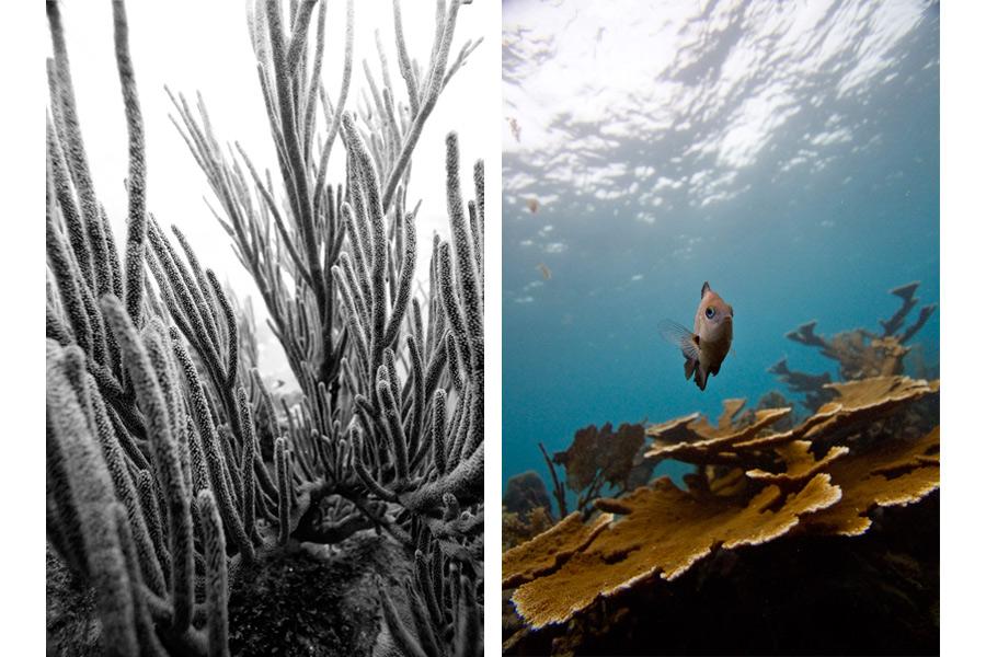 dominicanrepublic_coral2.jpg