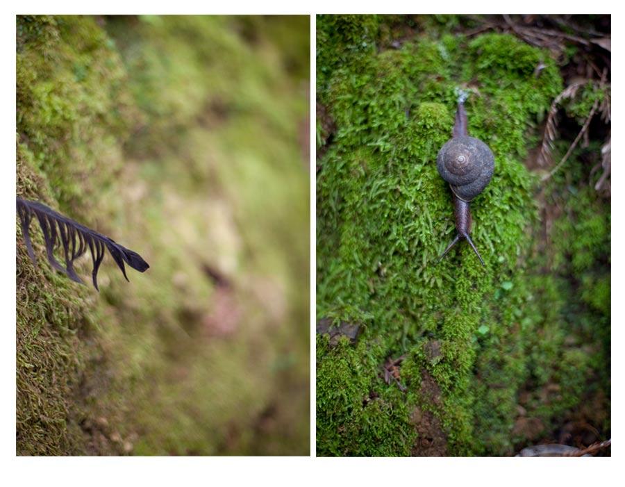 slug&feather.jpg