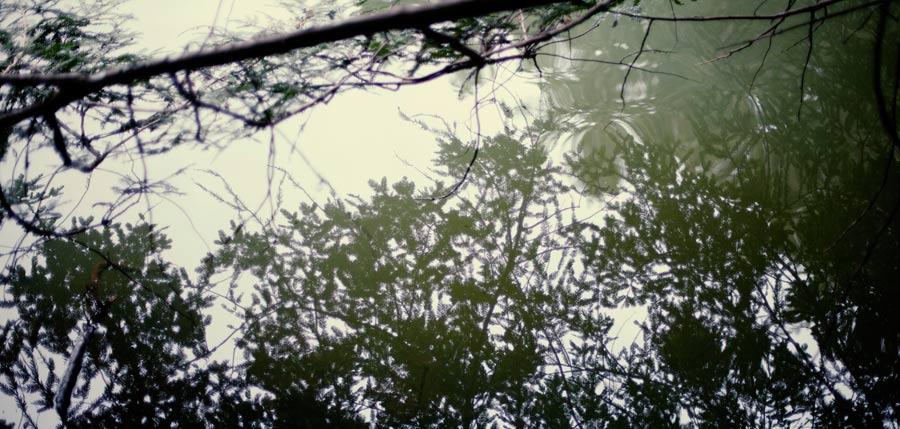 waterflection.jpg