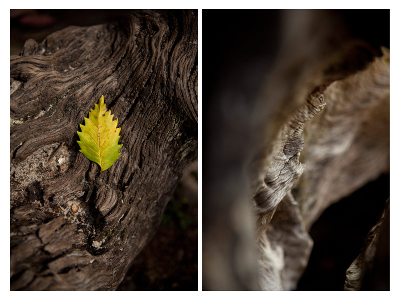leaf.jpg