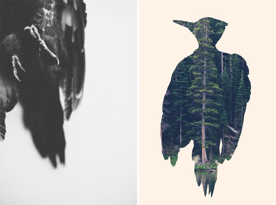 woodpecker-courtneymichalik.jpg