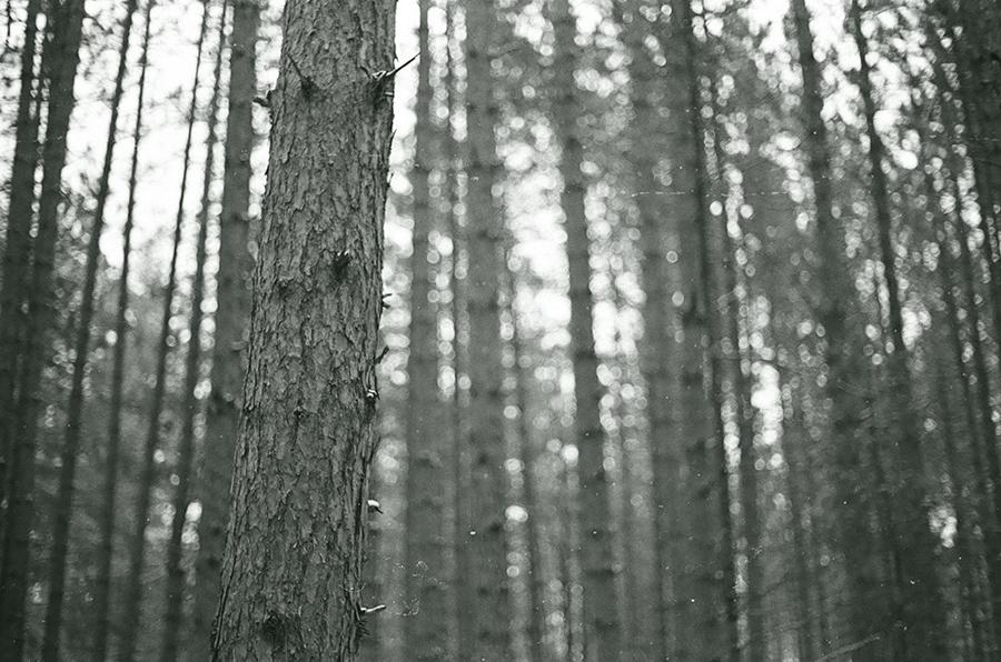 NMich_KodakPortra400_07.jpg
