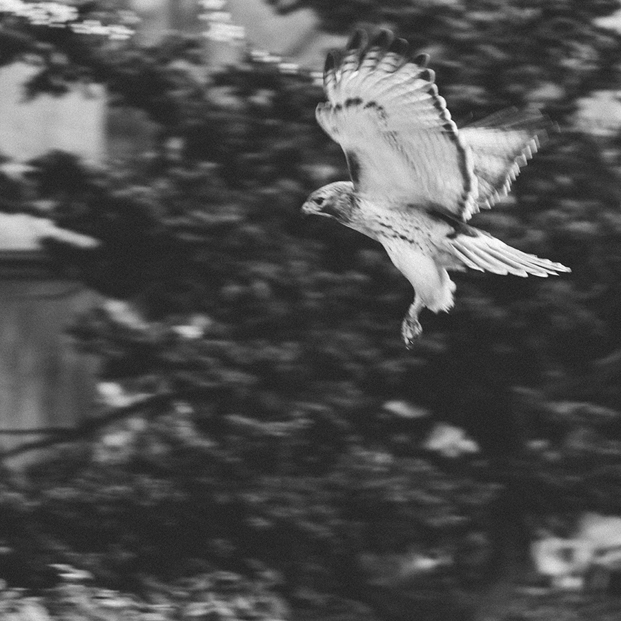 falcon-web.jpg
