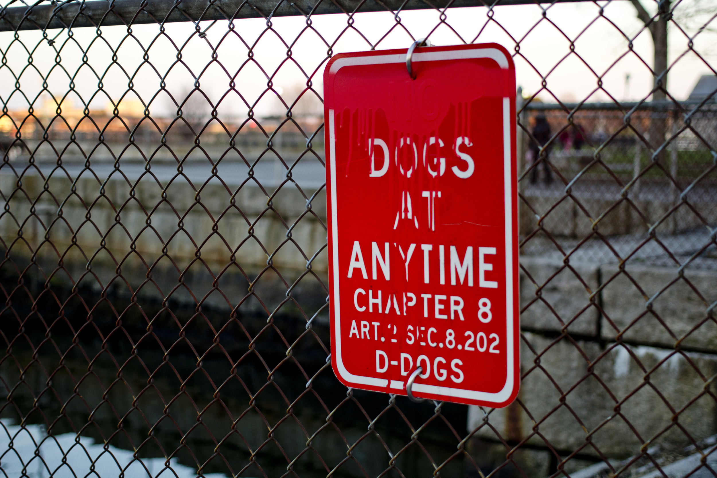 DogsIMG_2218.jpg