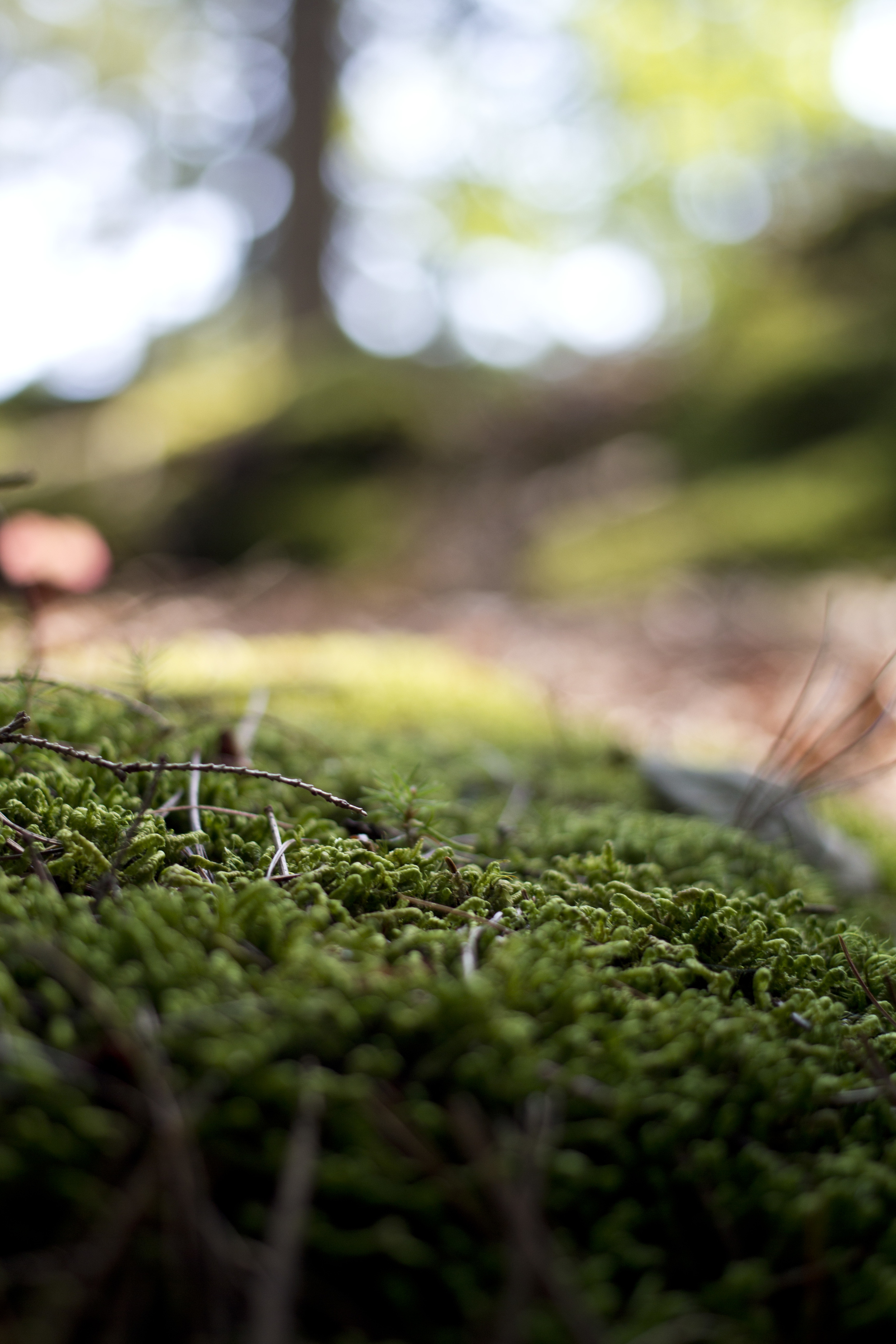 Miniature World - Acadia National Park