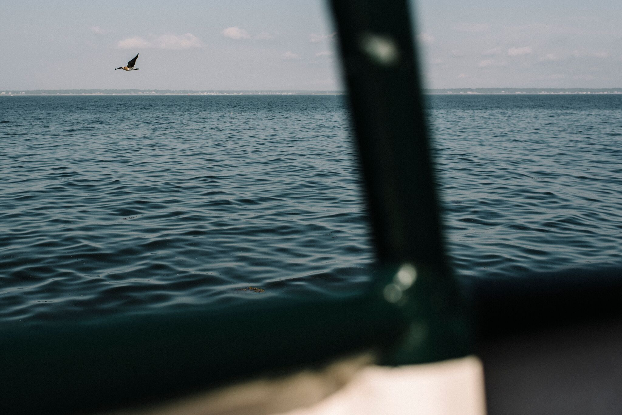 Seagull flying next to a ferry boat