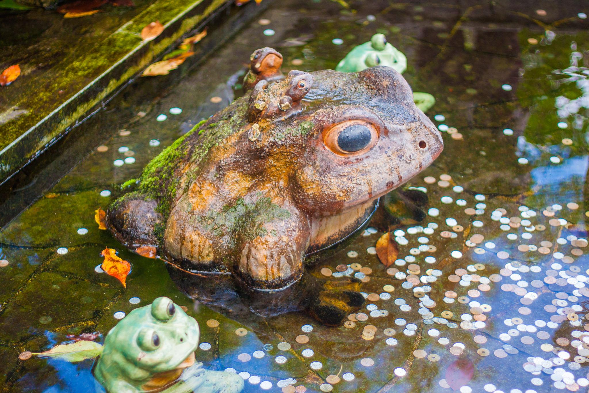 chōzubachiA Guide to Finding your Zen in the Peaceful and Serene Gardens of Tenryu-ji Temple Arashiyama