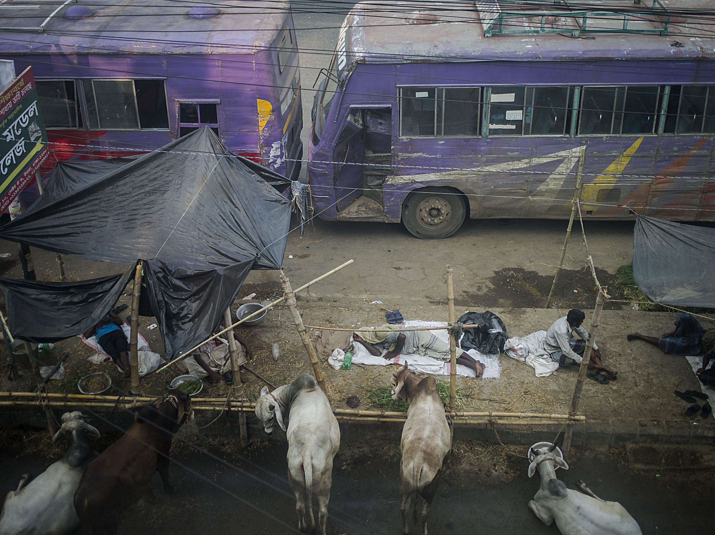 Farmers sleep out for days trying to sell their cow for Eid al-Adha.