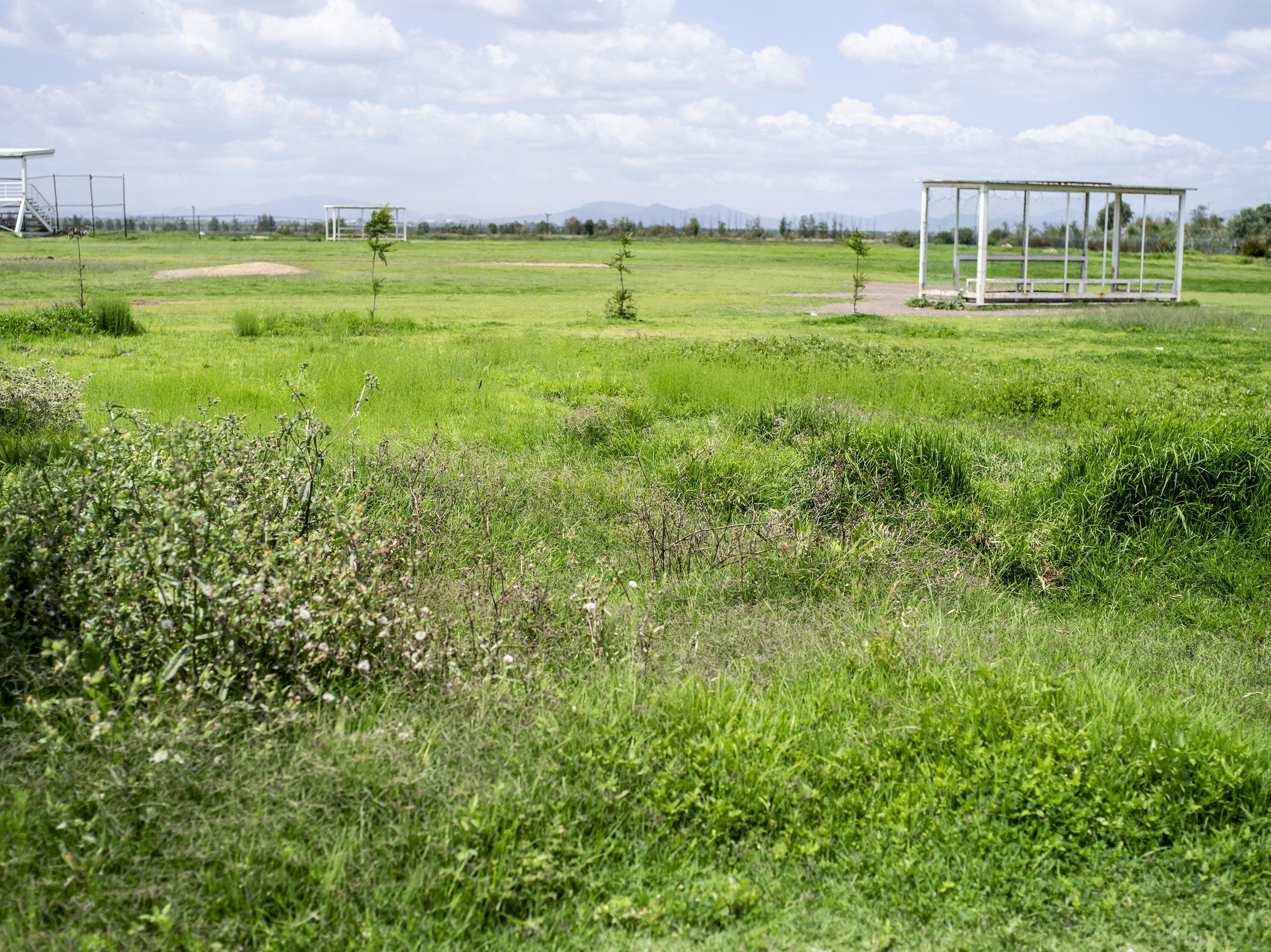 mexican grass.jpg