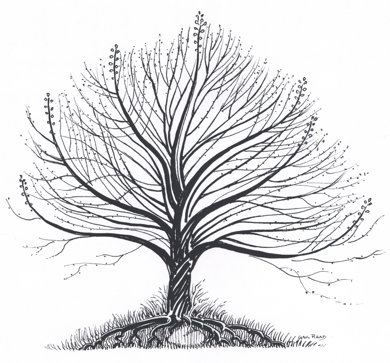Arbez Plumtree.JPG