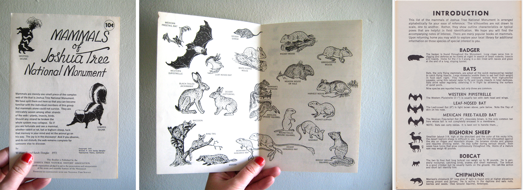 Mammals of Joshua Tree National Monument , by the   Joshua Tree Natural History Association   in 1972.