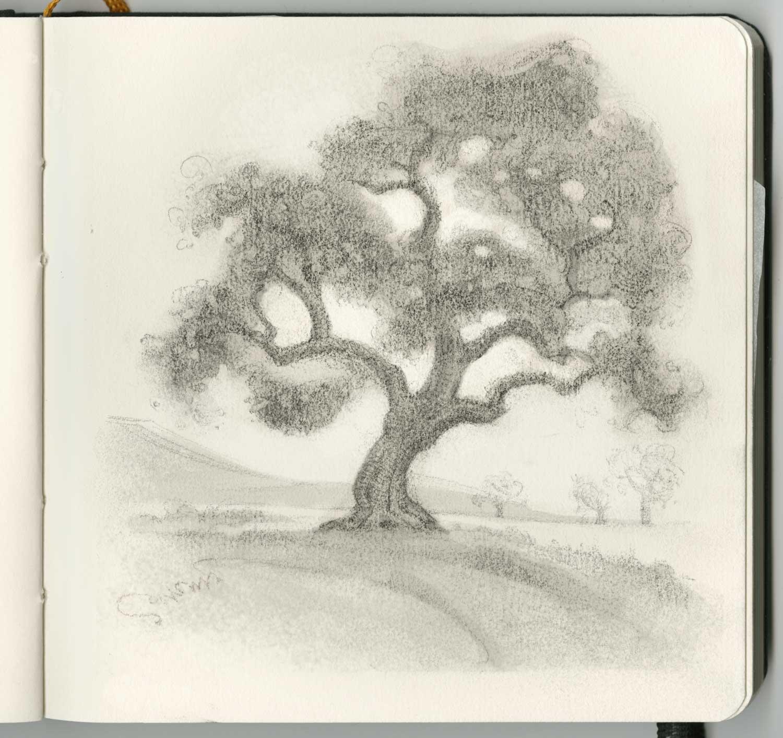 Oak tree in Carmel Valley, California.