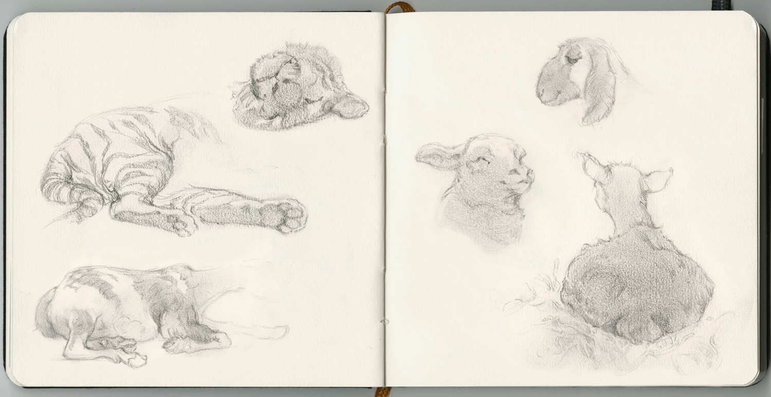Sketching, The Oakland Zoo.