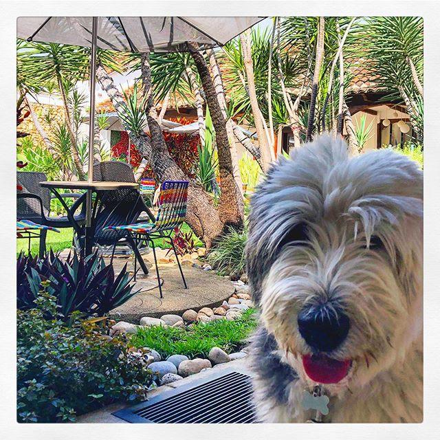 Selfie. #hotelcasadelina #petfriendlyhotel #garden