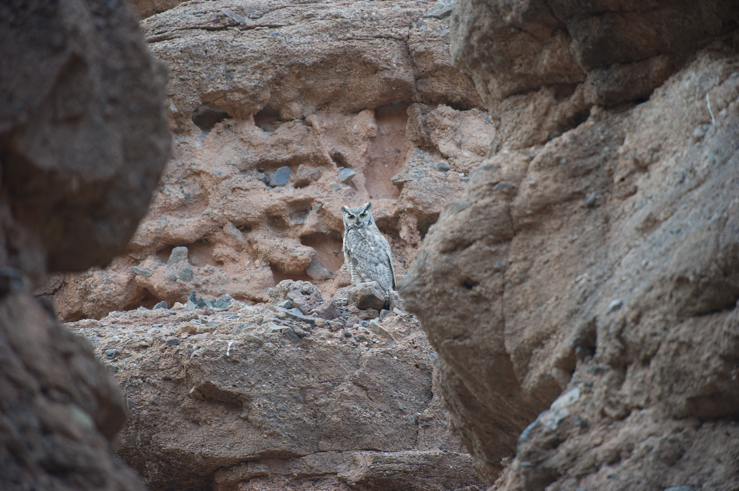 This owl flew down the slot canyon only a few feet above my head as I was walking up the canyon.