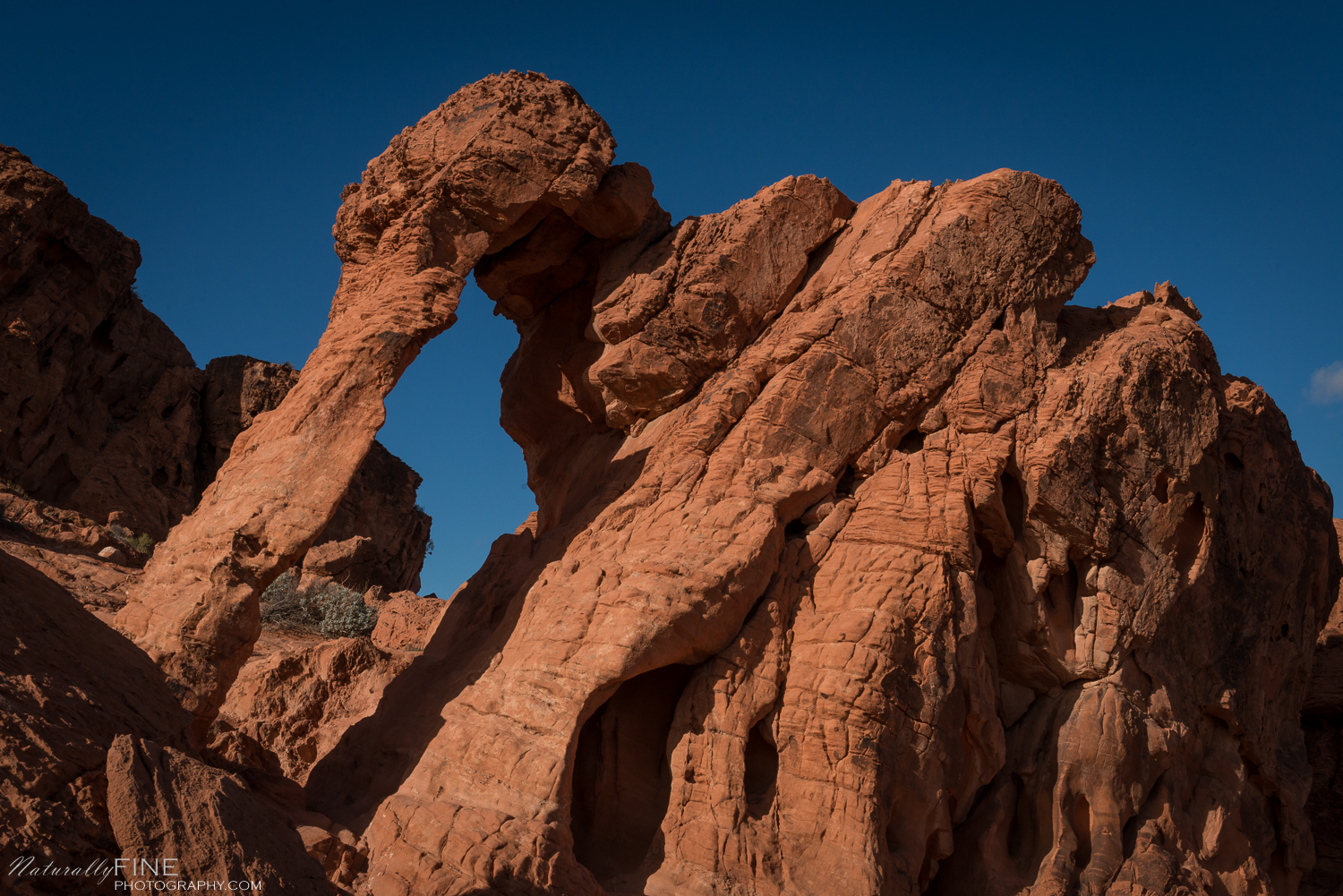 The Elephant at Valley of Fire State Park.