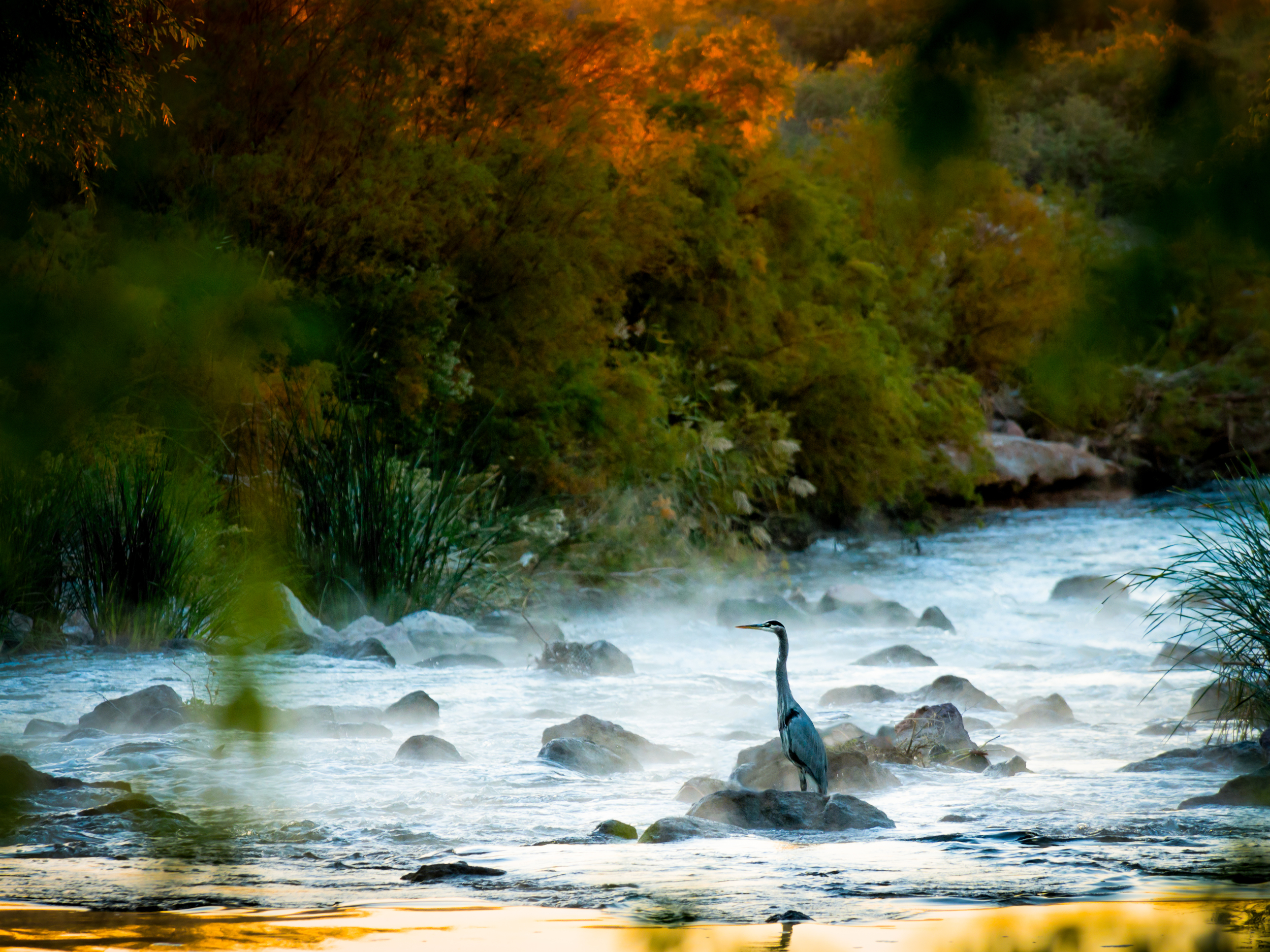 Sunrise looking down Las Vegas Wash as a Blue Heron looks for breakfast.