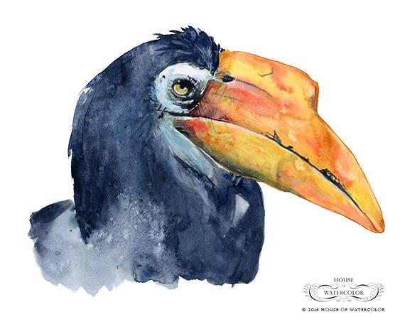 """""""Wrinkled Hornbill"""""""