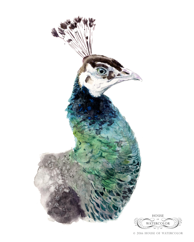 House-of-Watercolor-Peahen-Portfolio.png