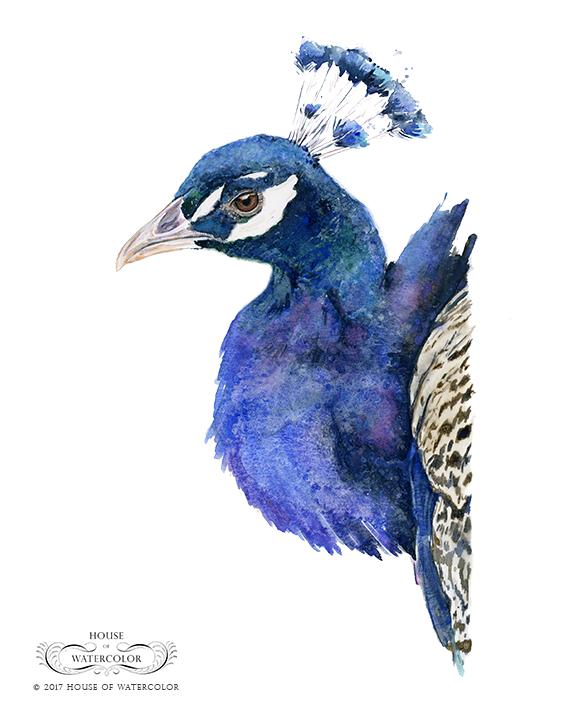 House-of-Watercolor-Peacock-Portrait-Portfolio.png