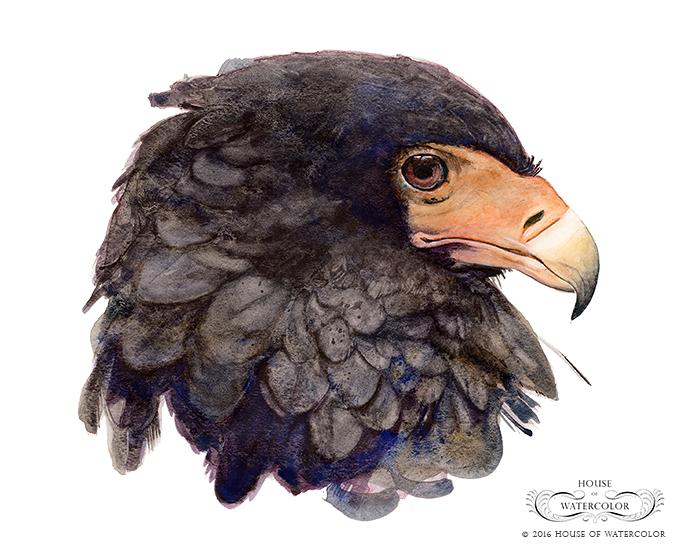House-of-Watercolor-Bateleur-Eagle-Portfolio.png