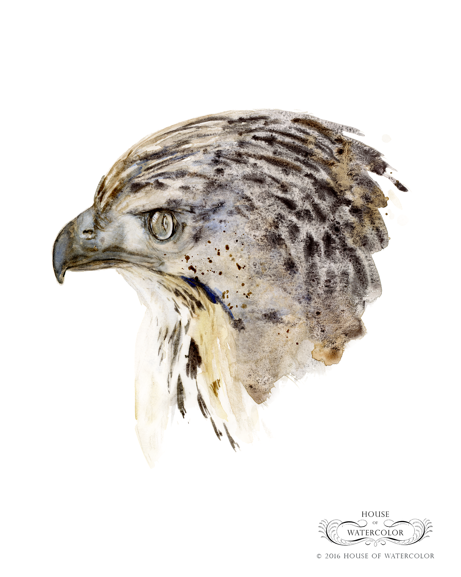 House-of-Watercolor-Red-tailed-Hawk-Portfolio.png