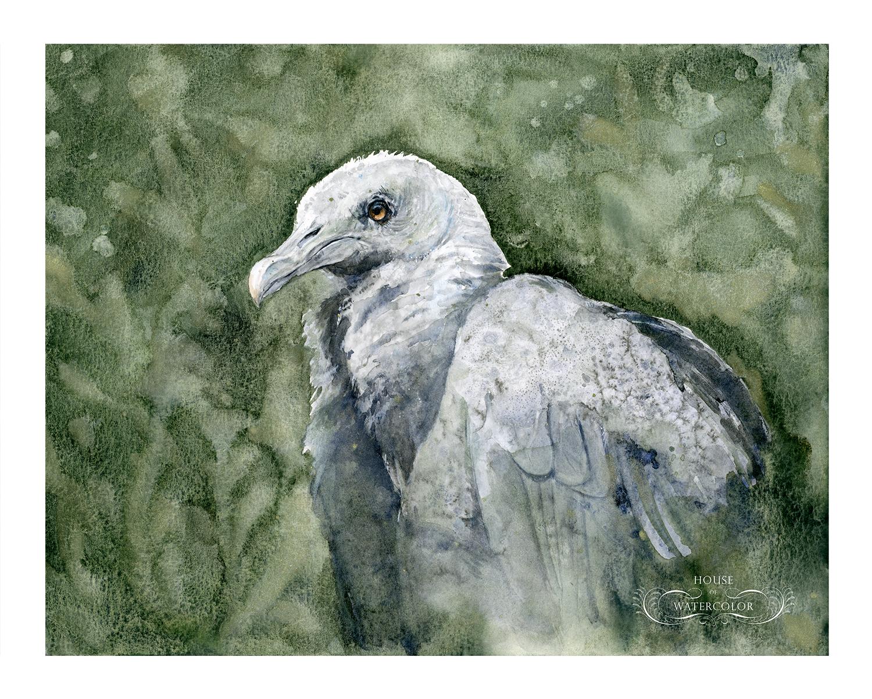 House-of-Watercolor-Black-Vulture-Portfolio.png
