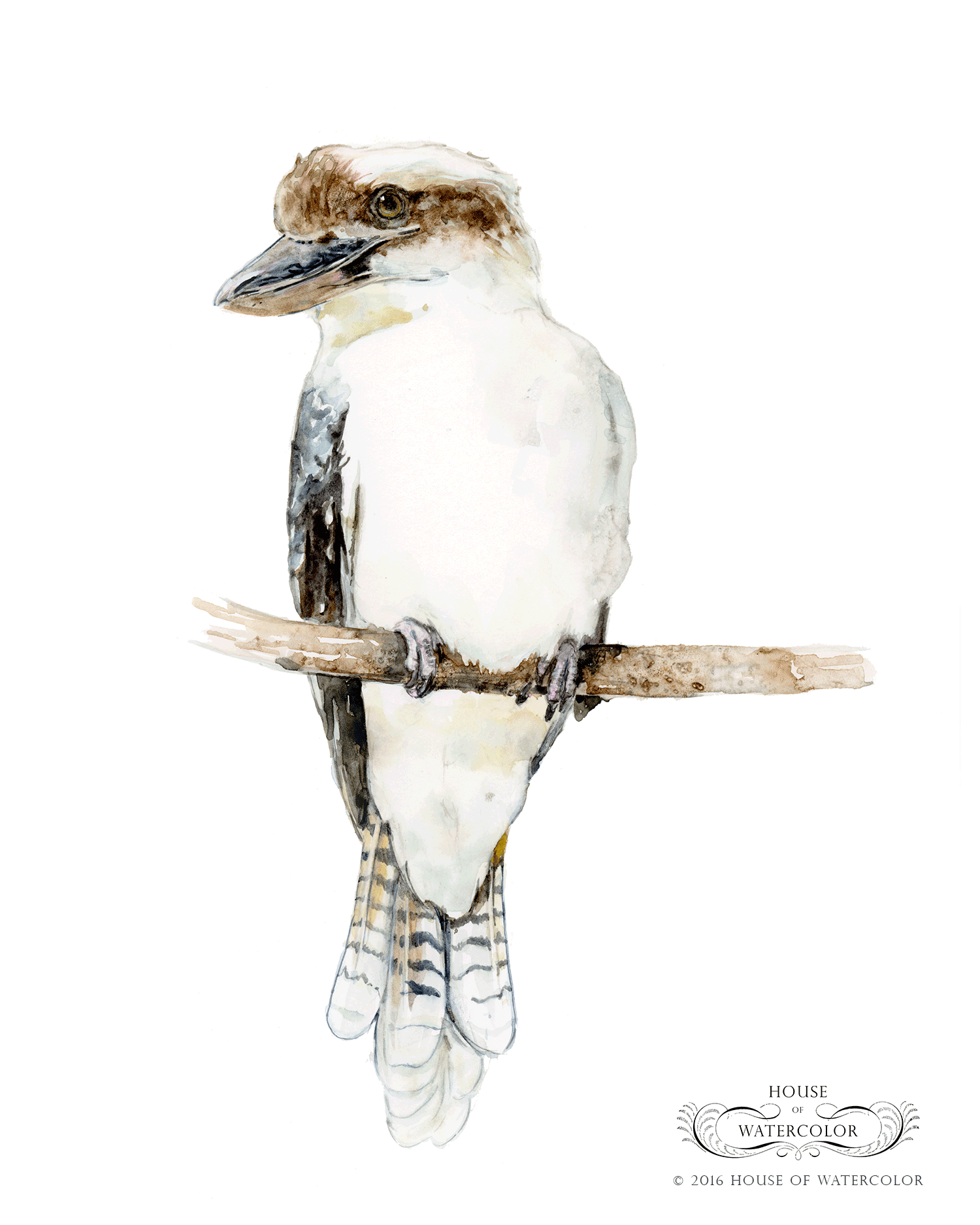 House-of-Watercolor-Kookaburra-Portfolio.png