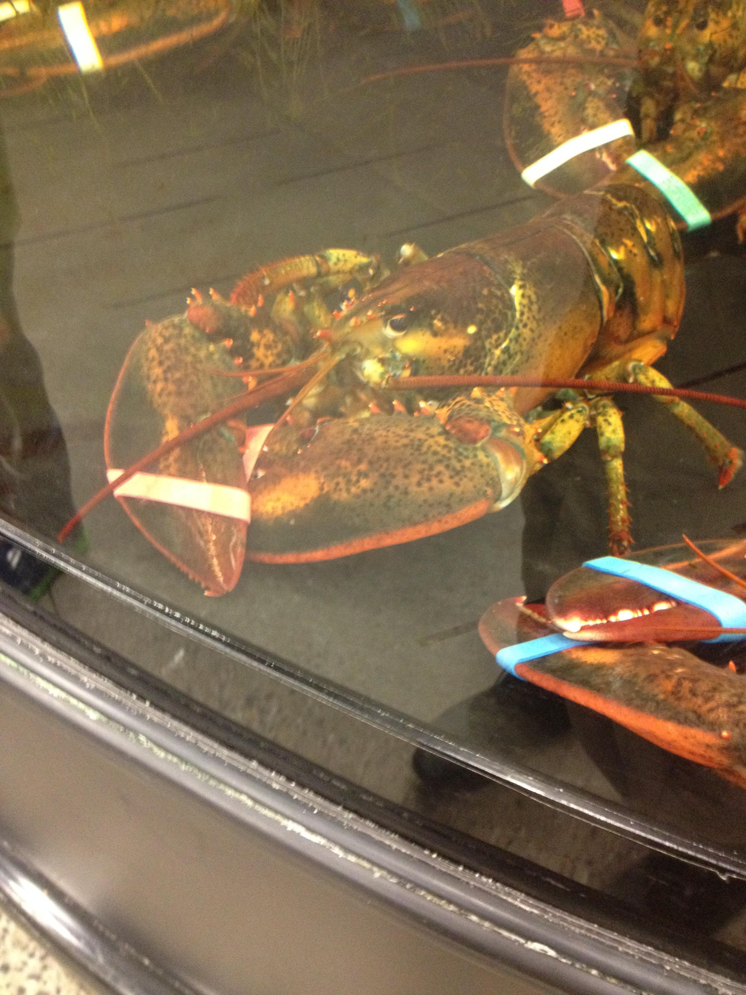 sobeys-lobster