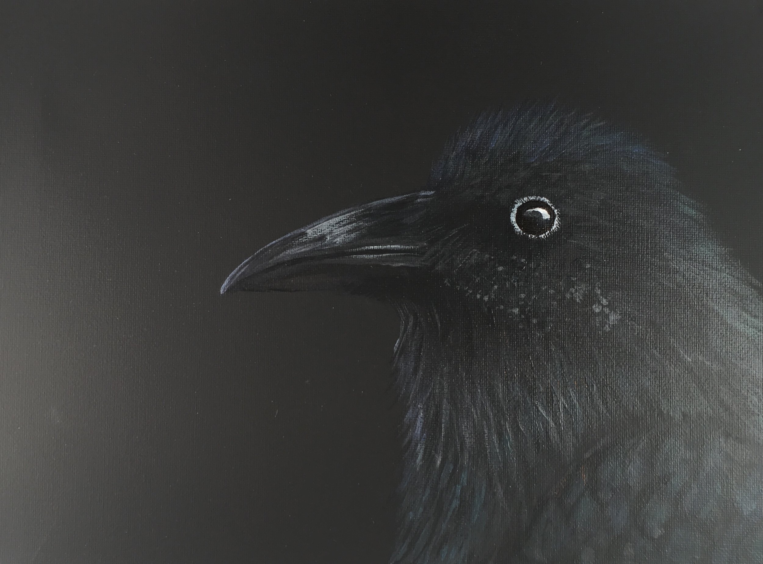 """""""Young Raven""""  by Sarah Mandell (January 30th, 2018)"""