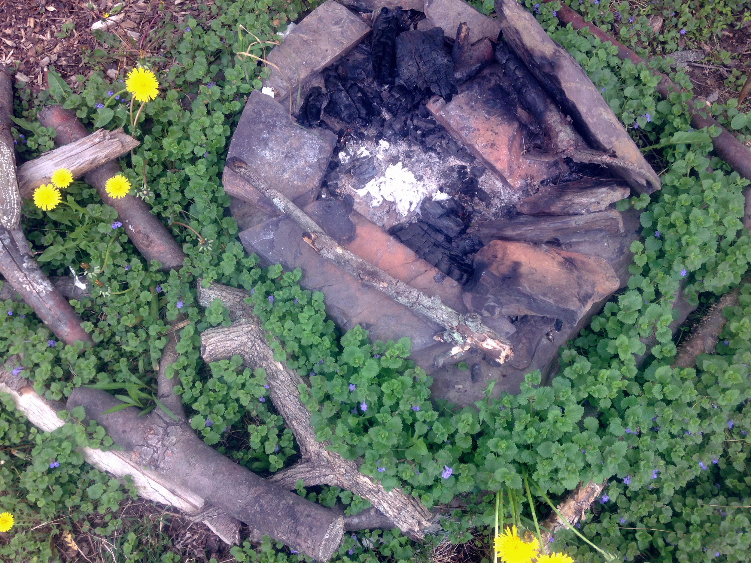 Fire pit, Ground Ivy