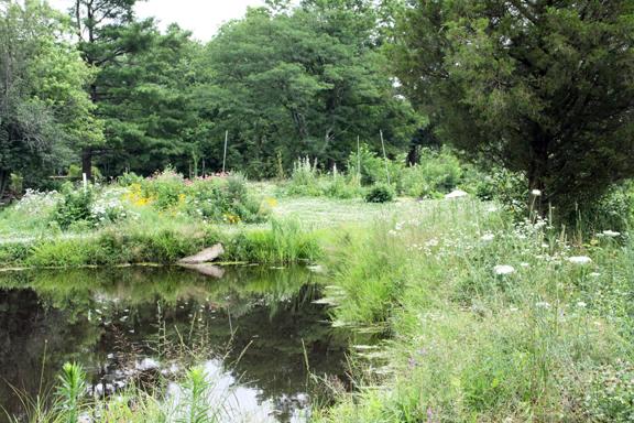 moon pond, eastern red cedar